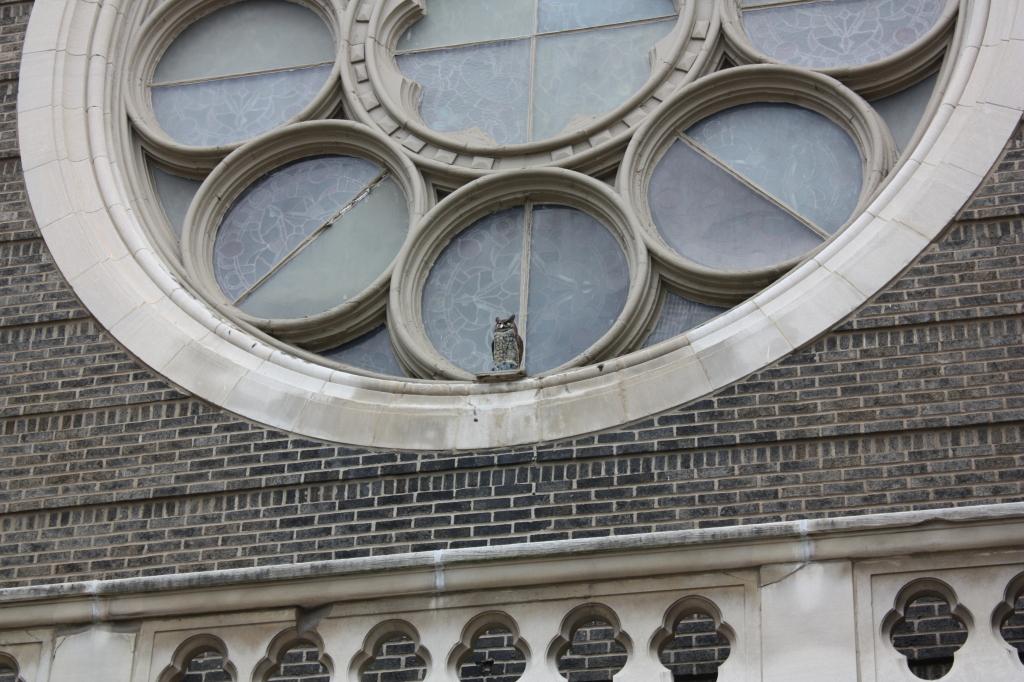 Owl on St Anthony Church